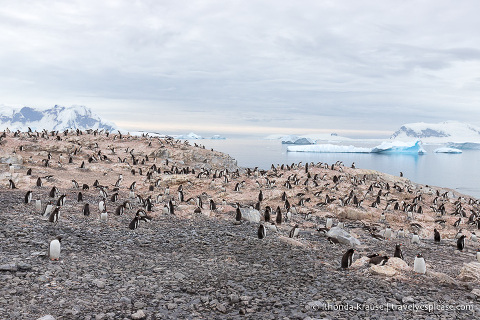 Wildlife in Antarctica- A Visitor's Guide to Antarctic Wildlife