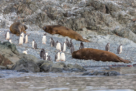 Antarctic Wildlife- A Visitor's Guide to the Animals in Antarctica