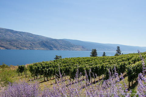 travelyesplease.com | The Okanagan- Western Canada's Wine Country and Summer Playground