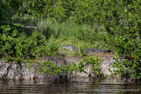 travelyesplease.com | Exploring Everglades National Park