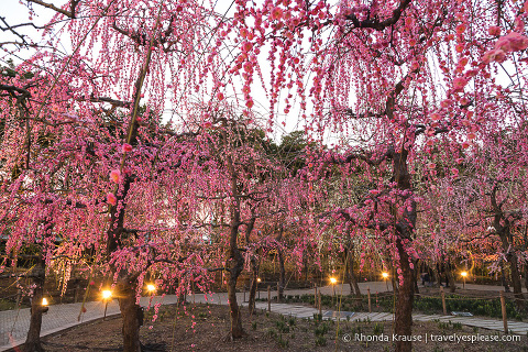 travelyesplease.com | Visiting the Nabana no Sato Winter Illumination and Flower Garden