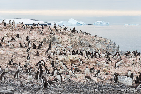 Antarctica Cruise Itinerary- Visiting Antarctica, South Georgia and the Falkland Islands