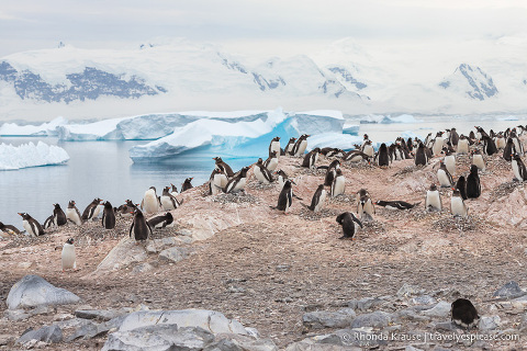 Antarctica Travel Guide- What to Expect When Travelling to Antarctica for the First Time