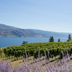 The Okanagan- Western Canada's Wine Country and Summer Playground