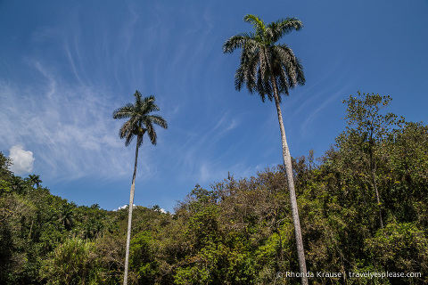 travelyesplease.com   Hiking Guanayara National Park, Cuba