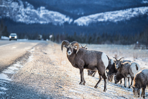 travelyesplease.com | 8 Reasons to Visit Jasper in January (and All Winter Long!)