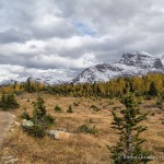 Larch Valley Hike- Lake Louise, Banff National Park