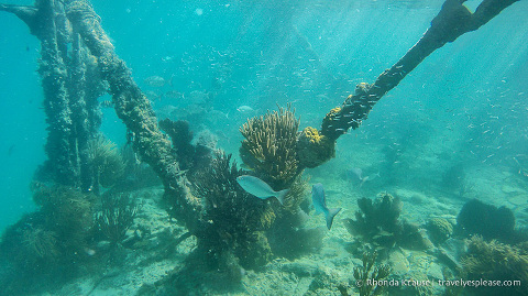 Snorkeling at Dry Tortugas National Park.
