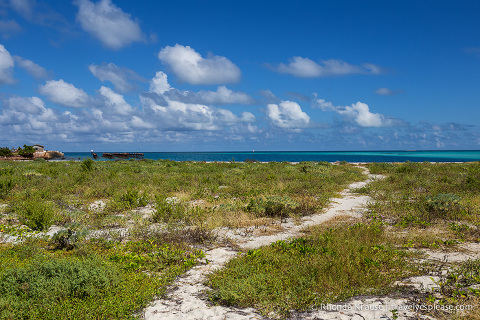 Grass, sand and water at Dry Tortugas National Park.