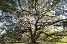 travelyesplease.com | Photo of the Week: Majestic Oak- Savannah, Georgia