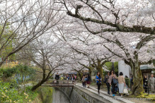 travelyesplease.com | The Path of Philosophy- Kyoto