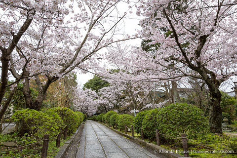 travelyesplease.com | Cherry Blossom Viewing Spots in Kyoto- Our 6 Favourite Places to See Cherry Blossoms in Kyoto