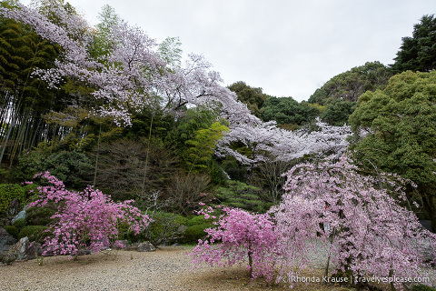 travelyesplease.com | Cherry Blossom Viewing Spots in Kyoto- Our 6 Favourite Locations