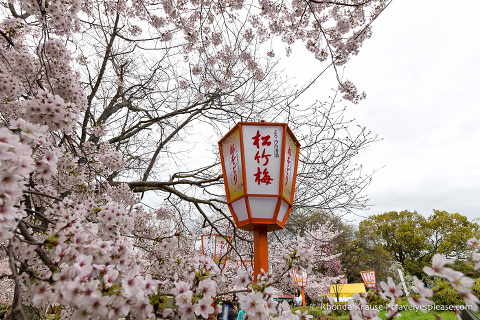 travelyesplease.com | Where to See Cherry Blossoms in Kyoto- Our 6 Favourite Sakura Viewing Spots in Kyoto