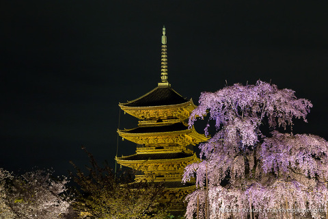 travelyesplease.com | Kyoto's To-ji Temple by Day and Night