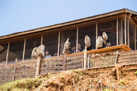 travelyesplease.com   Visiting Iwatayama Monkey Park in Kyoto