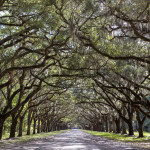 Wormsloe Historic Site- Enjoying History and Nature in Savannah
