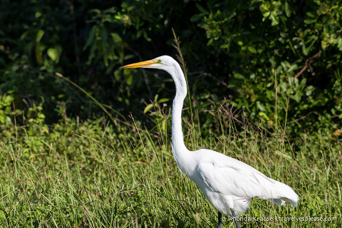 Exploring Everglades National Park- Points of Interest