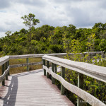 Exploring Everglades National Park