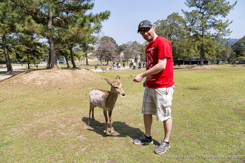 travelyesplease.com | Feeding Deer in Nara Park