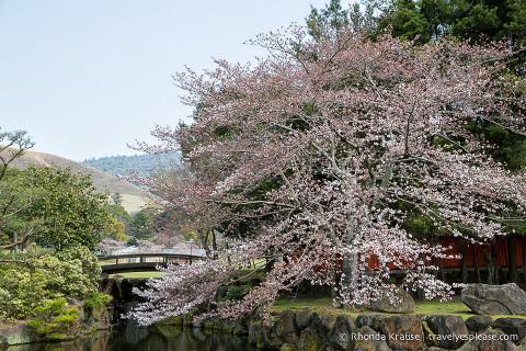 travelyesplease.com | Exploring Nara Park- Temples, Shrines and Deer!