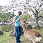 Feeding Deer in Nara Park, Japan