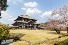 travelyesplease.com   Exploring Nara Park- Temples, Shrines and Deer!