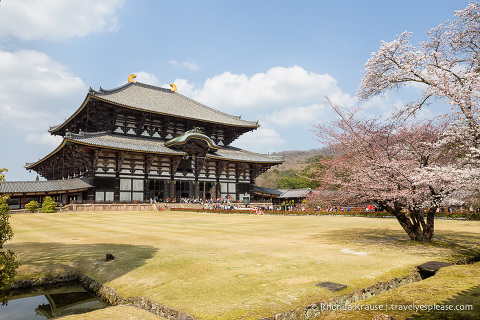 travelyesplease.com | The Best Attractions in Nara Park- Temples, Shrines and Deer!