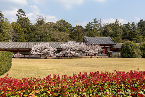travelyesplease.com | Self-Guided Walking Tour of Nara Park- Temples, Shrines and Deer!
