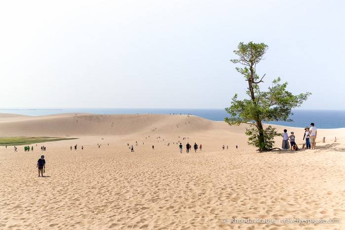 Tottori Sand Dunes- Enjoying Japans Largest Dunes