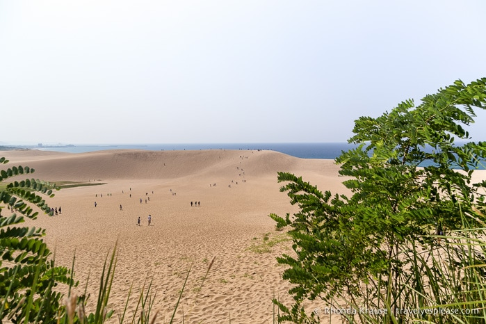 travelyesplease.com | The Tottori Sand Dunes- Enjoying Japan