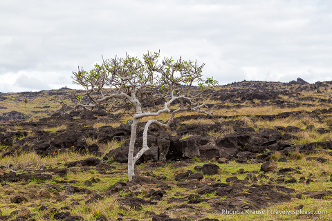 travelyesplease.com | 4 Days in Easter Island- A Self-Guided Tour of Rapa Nui