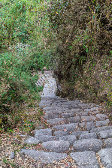 Stone steps on the Inca Trail