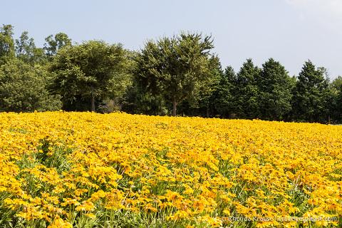 travelyesplease.com   Visiting Tottori Hanakairo Flower Park- One of Japan's Largest Flower Parks