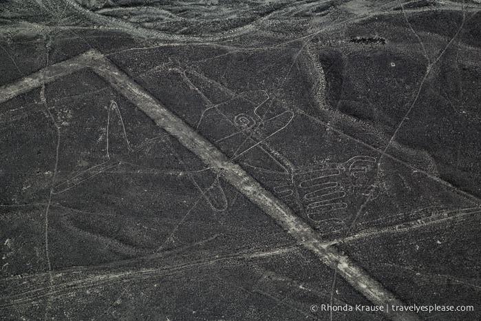 travelyesplease.com | Nazca Lines Flight- Flying Over Peru