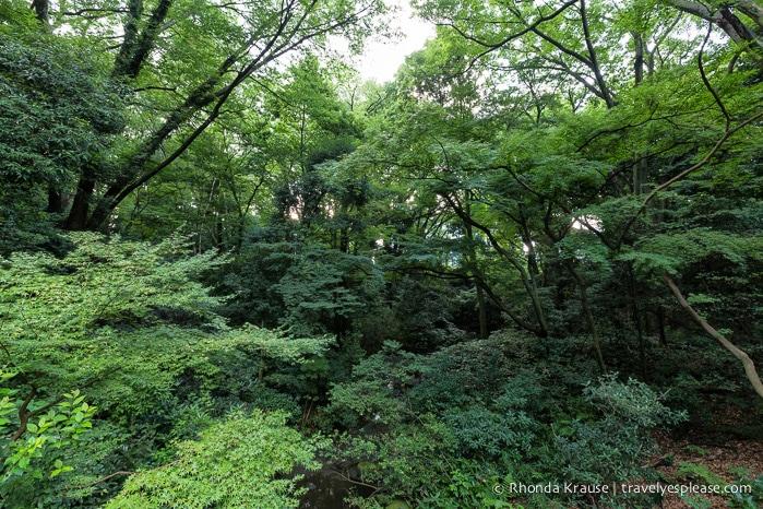 travelyesplease.com | Visiting Meiji Shrine- Tokyo