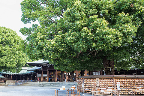 travelyesplease.com | Visiting Meiji Shrine- Tokyo's Most Important Shinto Shrine