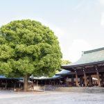 Visiting Meiji Shrine- Tokyo's Most Important Shinto Shrine