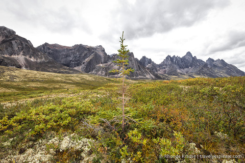 travelyesplease.com | The Yukon's Tombstone Territorial Park- Flightseeing and Landing Tour