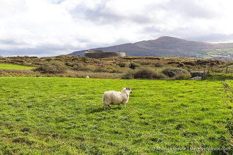 travelyesplease.com | Ireland Road Trip- 2 Week Itinerary