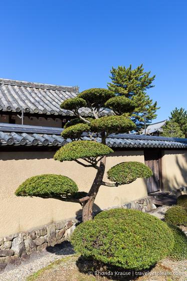 travelyesplease.com | Visiting Horyu-ji Temple, Japan