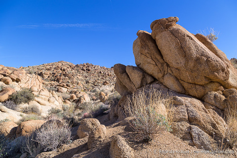 travelyesplease.com | Things to Do in Joshua Tree National Park in One Day