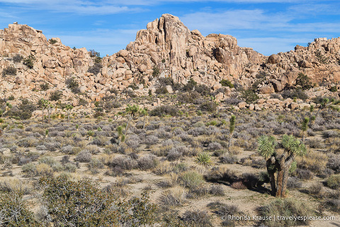 travelyesplease.com | Day Trip to Joshua Tree National Park- Places to See and Things to Do