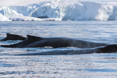 Whale sighting during a trip to Antarctica