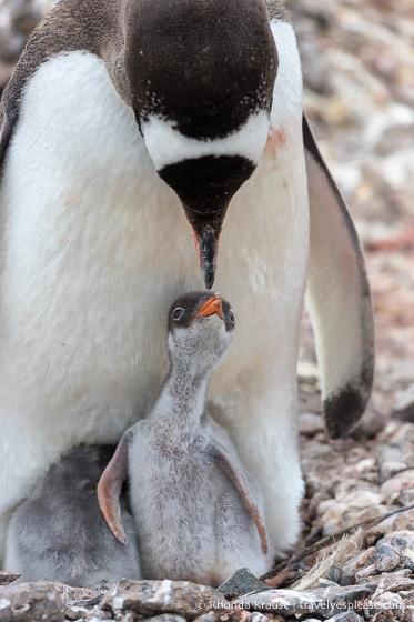 Antarctic Expedition- Cruise to Antarctica, South Georgia and the Falkland Islands