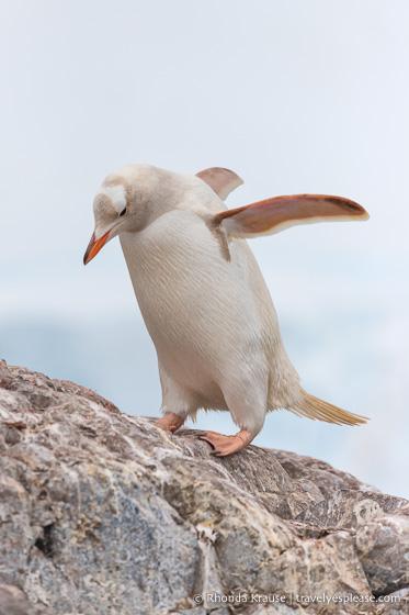 Antarctica Cruise Itinerary- Visiting Antarctica, South Georgia and the Falkland Islands