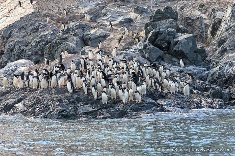 Adelie penguin colony in Antarctica
