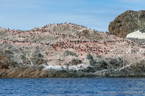 Adelie penguin colony on rocks in Antarctica