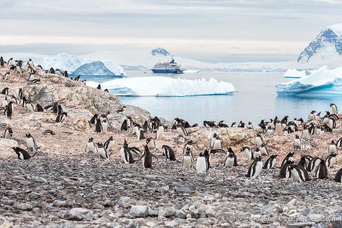 Antarctica Itinerary- Visit to Antarctica, South Georgia and Falkland Islands by Cruise