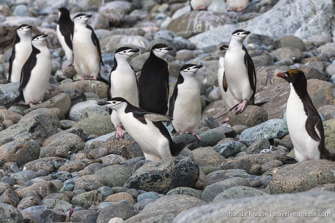 Travel to Antarctica- What to Expect on Your First Visit to Antarctica